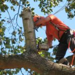 Tree removal in Lutz Florida