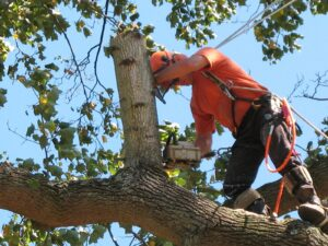 Dangerous tree removal in Tampa Florida