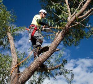 Tree service near me Tampa