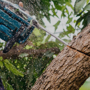 tree service providers