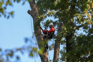 trees being cut in Citrus Park