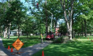 tree removal in Tampa florida